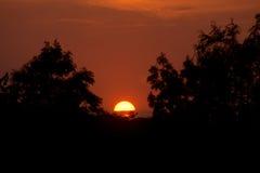 Arbres de coucher du soleil Images libres de droits