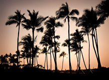 Arbres de coucher du soleil d'Hawaï Photographie stock libre de droits