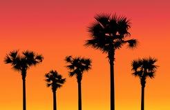 Arbres de coucher du soleil et de paume Photos stock