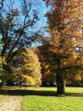 arbres de couleur automne en parc avec une herbe verte Images libres de droits