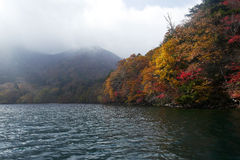 Arbres de couleur d'automne le long de la rivière Images libres de droits