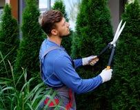 Arbres de coupe de jardinier avec des tondeuses Images libres de droits