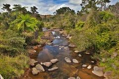 Arbres de crique et de fougère dans la forêt tropicale australienne image stock