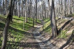 Arbres de cuvette de chemin en parc Image libre de droits