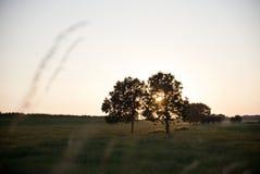 Arbres de cuvette de coucher du soleil dans Schalkwijk image stock