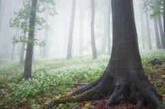 Arbres de cuvette de fleurs blanches dans la forêt au printemps images libres de droits