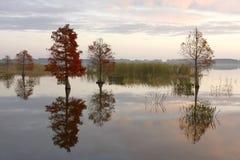 Arbres de cyprès chauve sur le lac en automne Photos stock