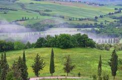 Arbres de cyprès de la Toscane avec la voie Image stock