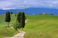 Arbres de cyprès de la Toscane avec la voie Photos stock