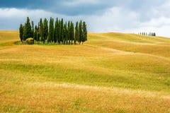 Arbres de cyprès de Toscany Images stock