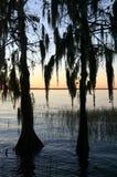 Arbres de Cypress au coucher du soleil Image libre de droits