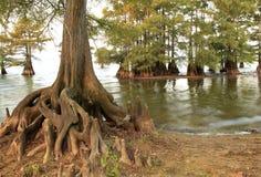 Arbres de Cypress chauve au bord du lac photo stock