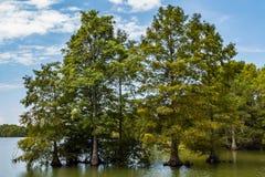 Arbres de Cypress chauve au lac courtaud en Virginia Beach photo libre de droits