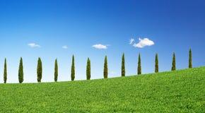 Arbres de Cypress dans une ligne photos libres de droits