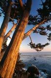 Arbres de Cypress sur le rivage images libres de droits