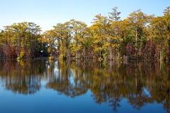 Arbres de Cypress, sur un étang de moulin (#1) Photos stock