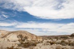 Arbres de désert du Néguev Images libres de droits