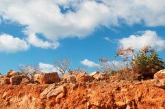 Arbres de Dragon Blood de bois mort et arbres de bouteille dans l'île de Socotra, Yémen Photos stock