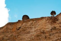 Arbres de Dragon Blood s'élevant sur les roches, île de Socotra, Yémen Image stock