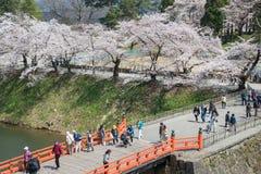 Arbres de fleurs de cerisier en parc de château de Tsuruga Photo libre de droits