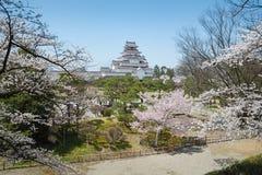 Arbres de fleurs de cerisier en parc de château de Tsuruga Images stock