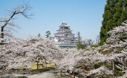 Arbres de fleurs de cerisier en parc de château de Tsuruga Image libre de droits