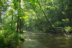 Arbres de fleuve de poudre Photographie stock libre de droits