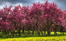 Arbres de floraison image stock
