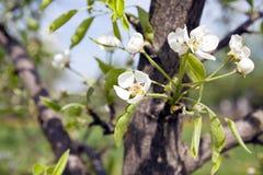Arbres de floraison Photographie stock libre de droits