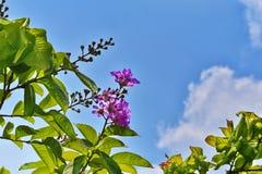 Arbres de floraison en quelques saisons d'été Images libres de droits