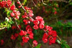 Arbres de floraison, fleurs Photos libres de droits