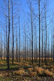 Arbres de forêt image stock