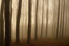 Arbres de forêt dans le brouillard Photo stock