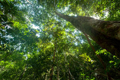 Arbres de forêt humide Photo libre de droits