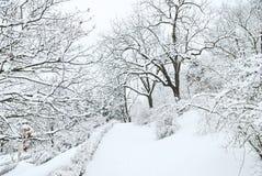 Arbres de Forest Park Image stock