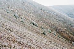 Arbres de Frost aux montagnes carpathiennes, Ukraine l'Europe photos libres de droits