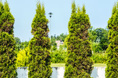 Arbres de jardin Image stock