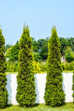 Arbres de jardin Photographie stock