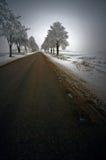 Arbres de l'hiver Images libres de droits
