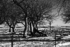 Arbres de l'hiver Images stock