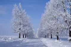 Arbres de l'hiver Photos stock