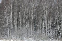 Arbres de l'hiver Photos libres de droits