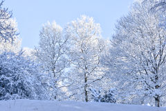 Arbres de l'hiver Image libre de droits