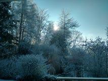 Arbres de l'hiver Image stock