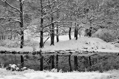 Arbres de l'hiver avec des réflexions Photos stock