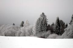 Arbres de l'hiver avec hoarfrost-2 Images libres de droits