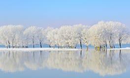 Arbres de l'hiver couverts de gel Photos libres de droits
