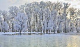 Arbres de l'hiver couverts de gel Images libres de droits
