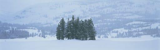 Arbres de l'hiver dans la tempête de neige Images libres de droits
