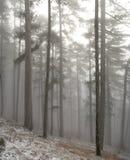 Arbres de l'hiver en montagnes Photo stock